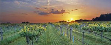 Arkansas Wineries