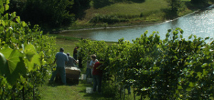 Indian Hills Winery